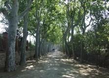 Nou article a la revista:  Llengua catalana: La Boca de la Mina